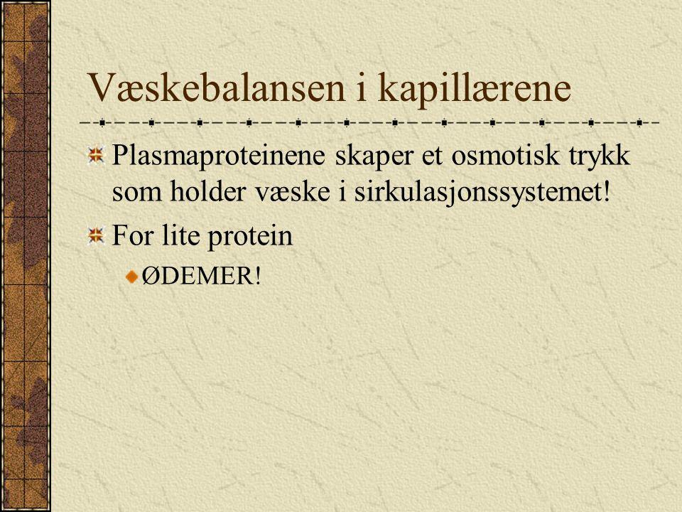 Væskebalansen i kapillærene