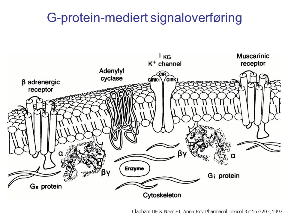 G-protein-mediert signaloverføring