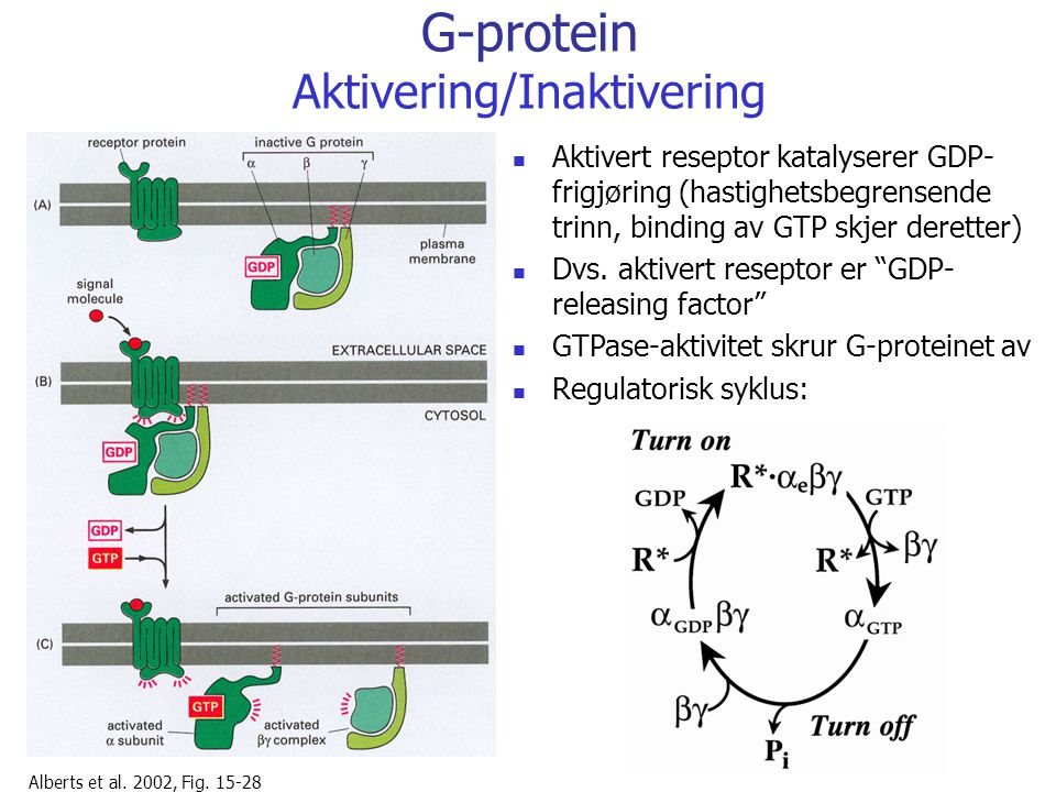 G-protein Aktivering/Inaktivering