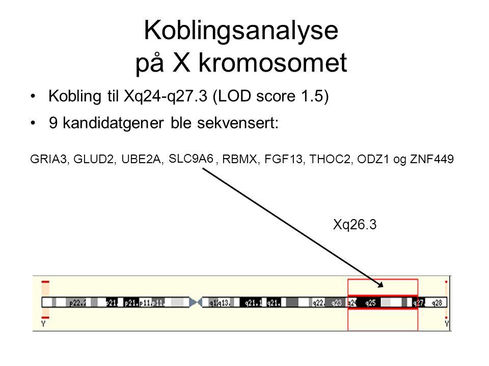 Koblingsanalyse på X kromosomet
