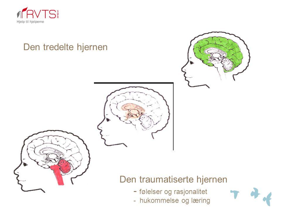 Den traumatiserte hjernen følelser og rasjonalitet