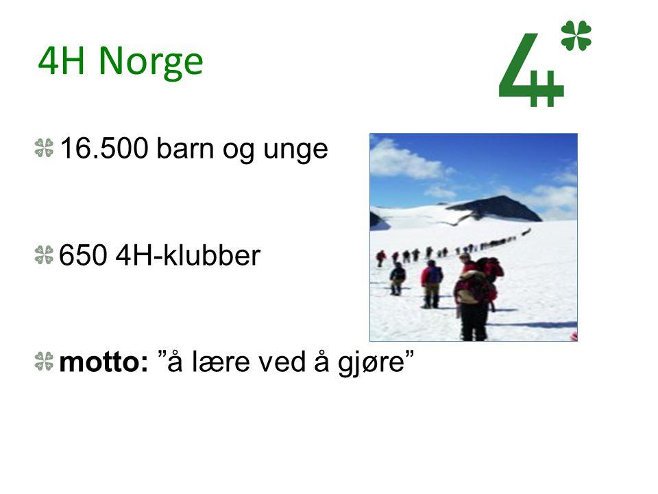 4H Norge 16.500 barn og unge 650 4H-klubber
