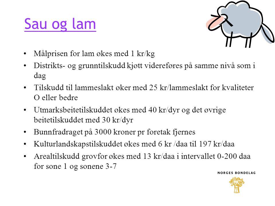 Sau og lam Målprisen for lam økes med 1 kr/kg
