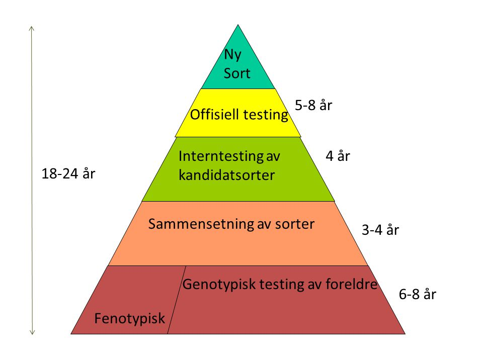 6-8 år 3-4 år. 4 år. 5-8 år. Genotypisk testing av foreldre. Sammensetning av sorter. Interntesting av kandidatsorter.