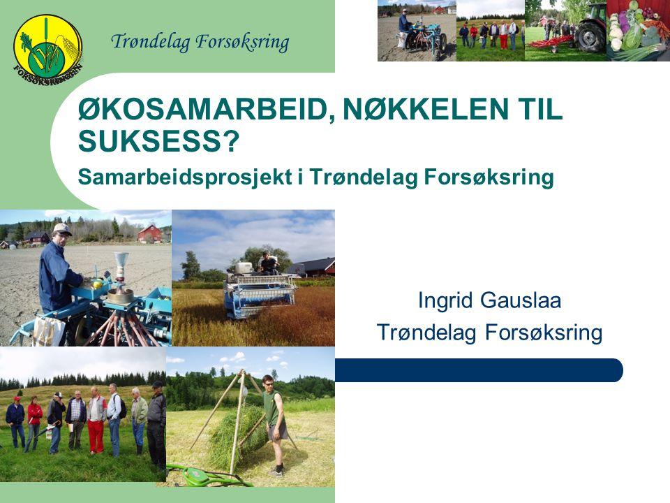 Ingrid Gauslaa Trøndelag Forsøksring
