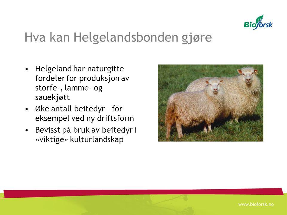 Hva kan Helgelandsbonden gjøre