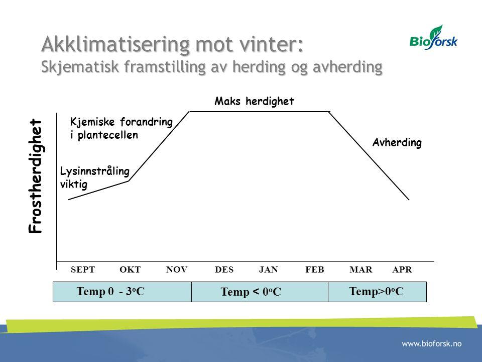 Akklimatisering mot vinter: Skjematisk framstilling av herding og avherding