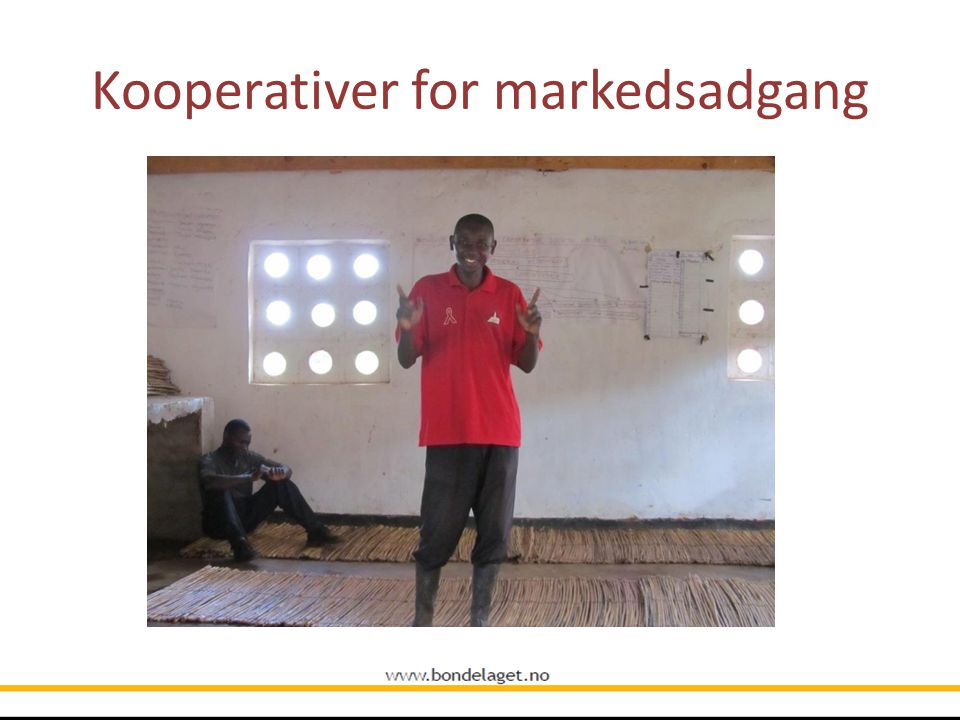 Kooperativer for markedsadgang