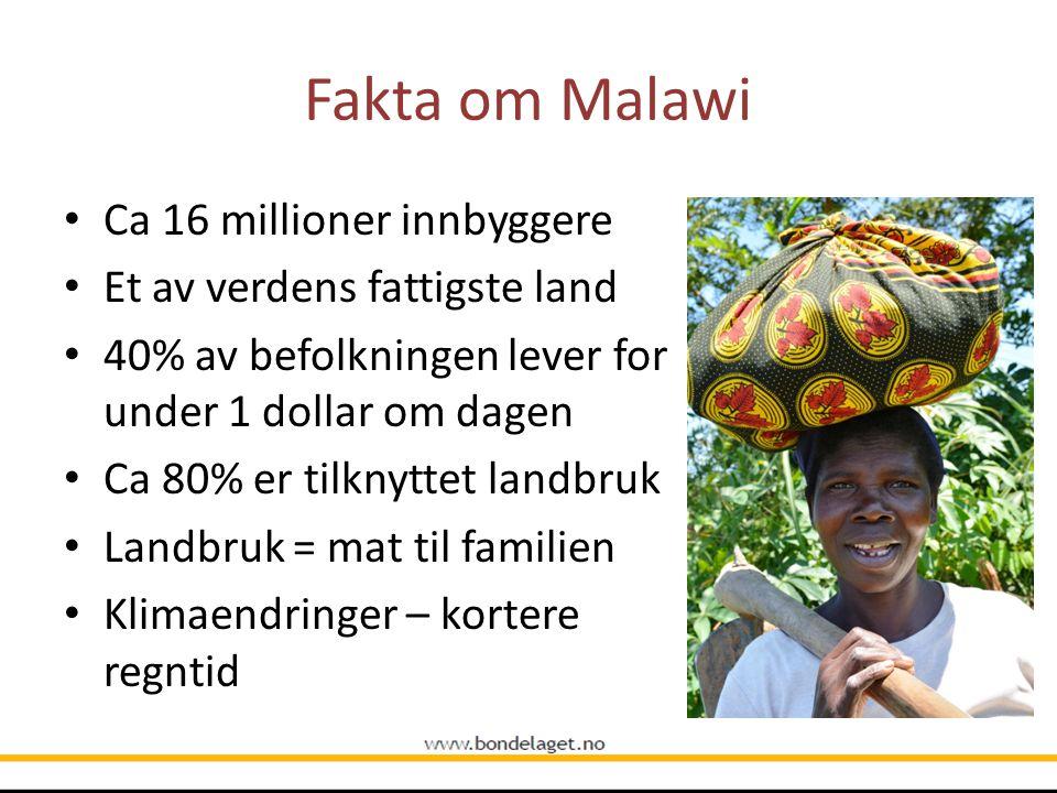Fakta om Malawi Ca 16 millioner innbyggere