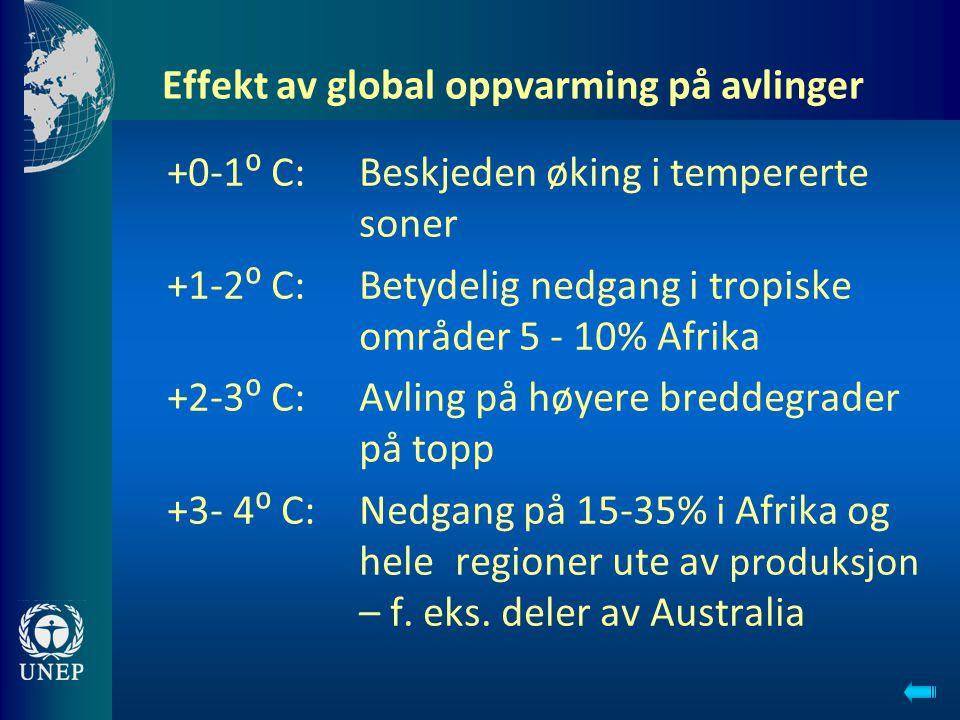 Effekt av global oppvarming på avlinger