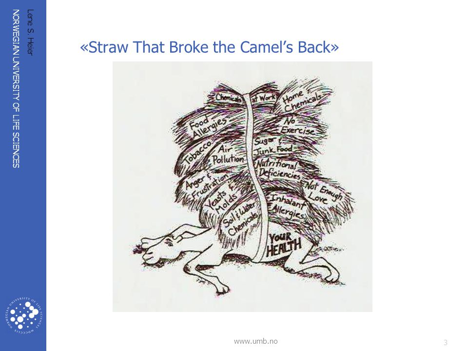 «Straw That Broke the Camel's Back»