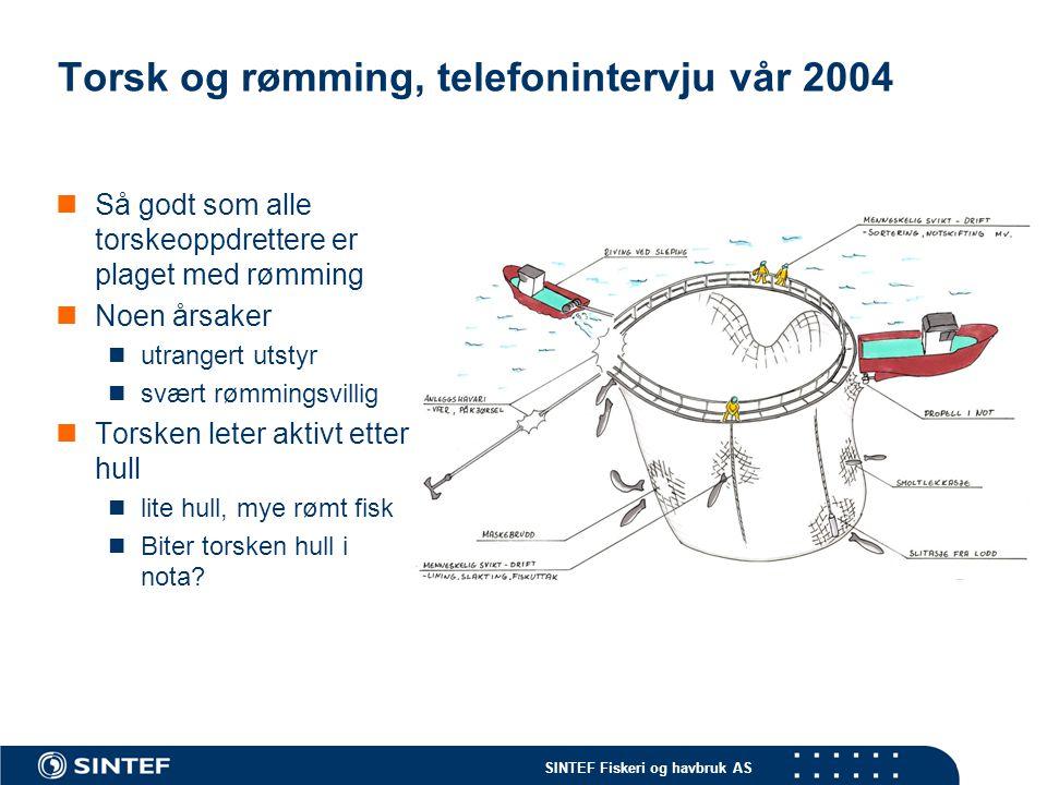 Torsk og rømming, telefonintervju vår 2004