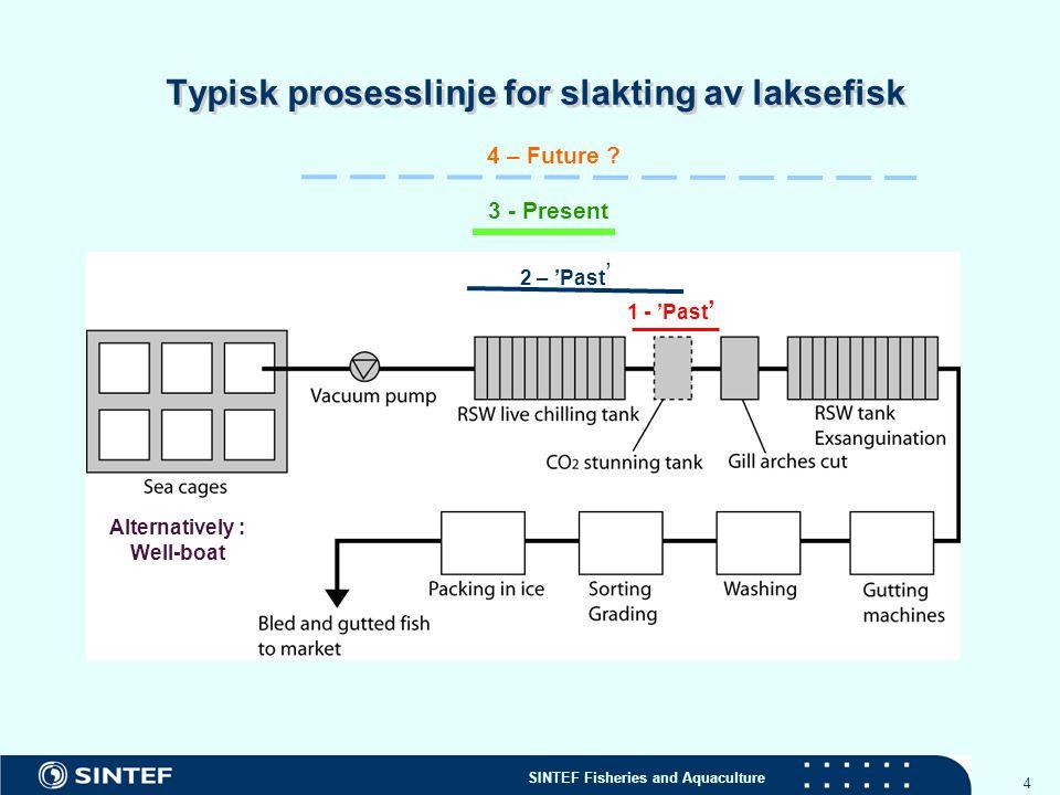 Typisk prosesslinje for slakting av laksefisk