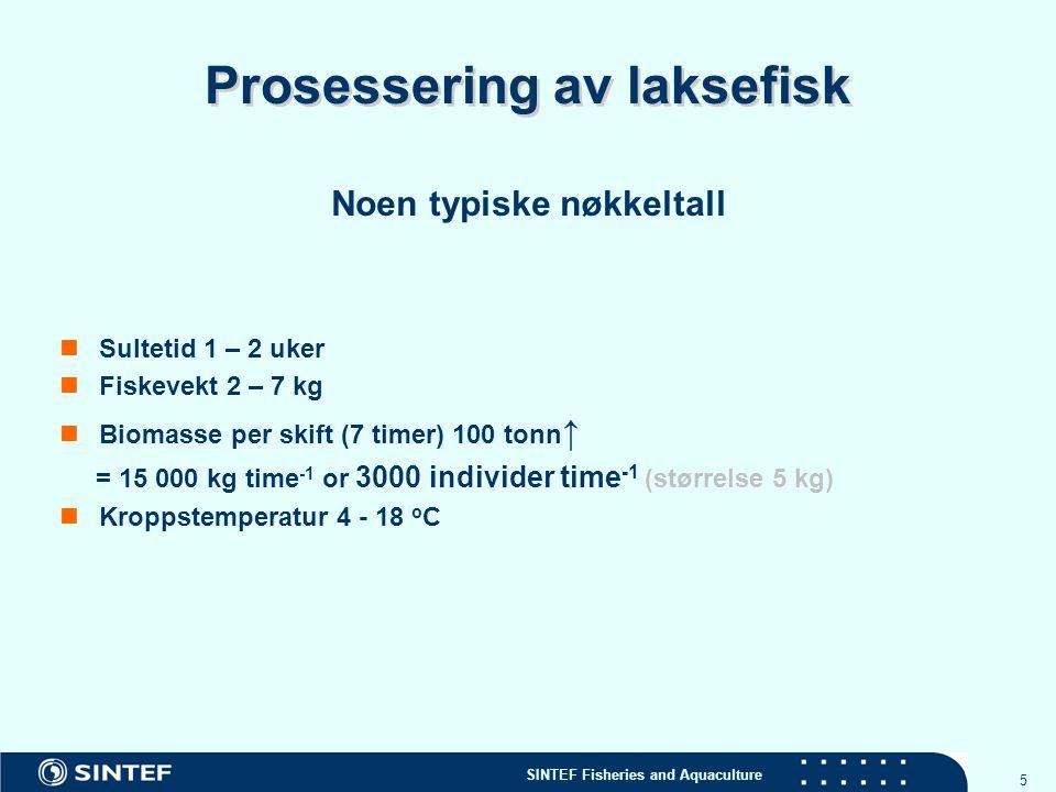 Prosessering av laksefisk