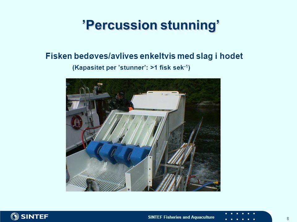 'Percussion stunning'