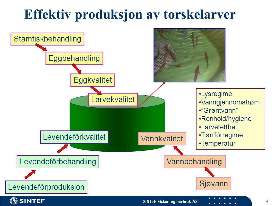 Effektiv produksjon av torskelarver