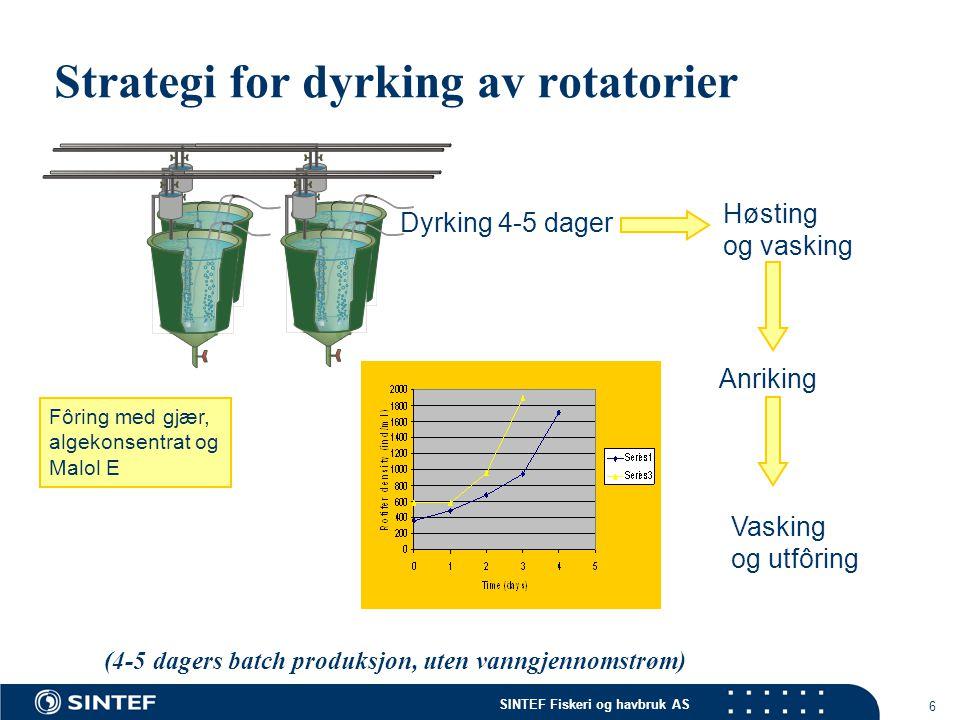 Strategi for dyrking av rotatorier