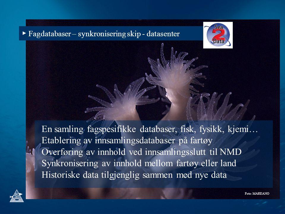 En samling fagspesifikke databaser, fisk, fysikk, kjemi…