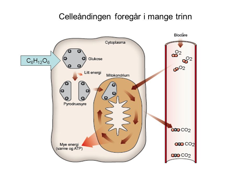 Celleåndingen foregår i mange trinn