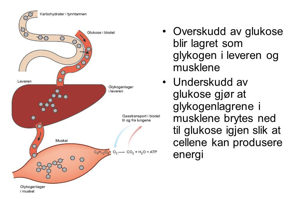 Overskudd av glukose blir lagret som glykogen i leveren og musklene