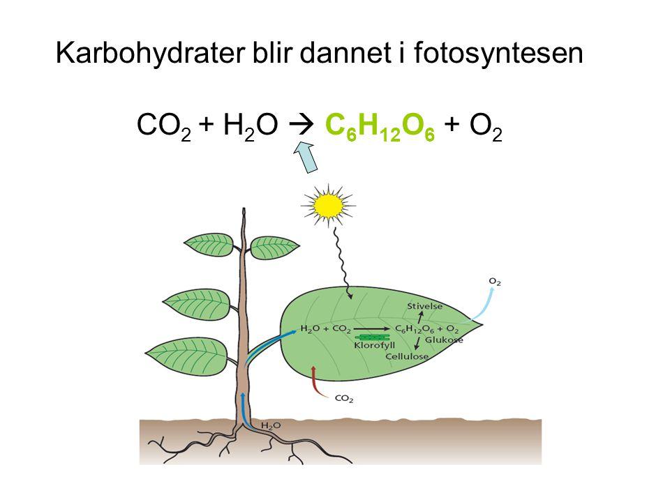 Karbohydrater blir dannet i fotosyntesen CO2 + H2O  C6H12O6 + O2