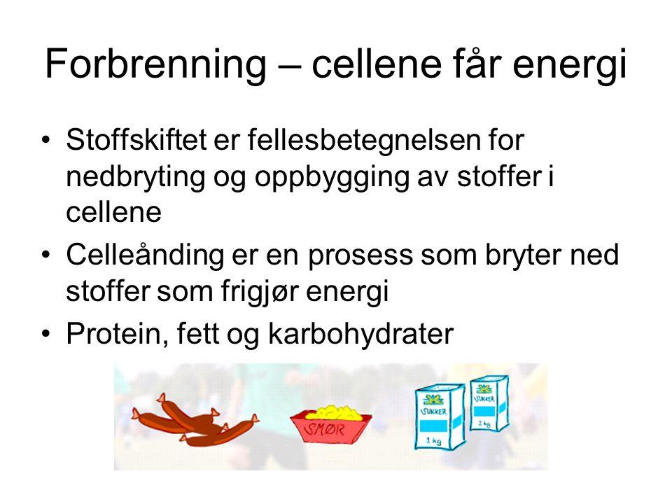 Forbrenning – cellene får energi