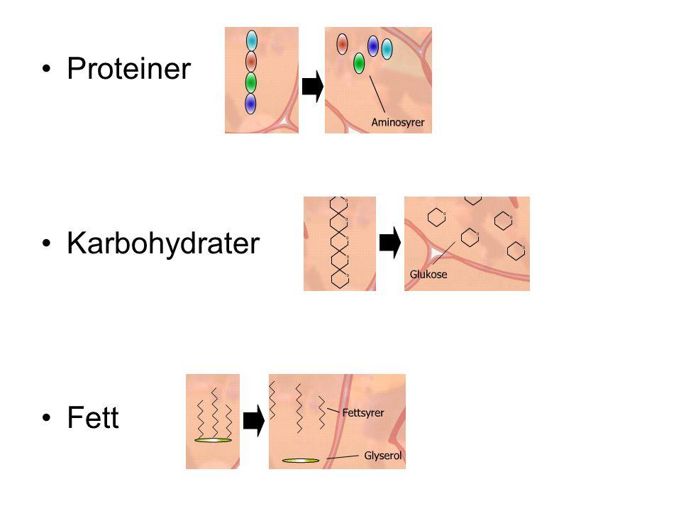 Proteiner Karbohydrater Fett
