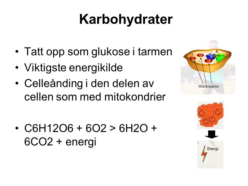 Karbohydrater Tatt opp som glukose i tarmen Viktigste energikilde