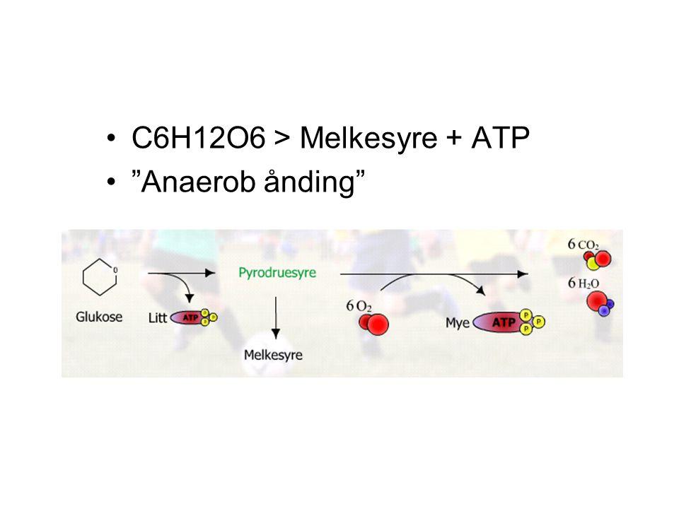 C6H12O6 > Melkesyre + ATP