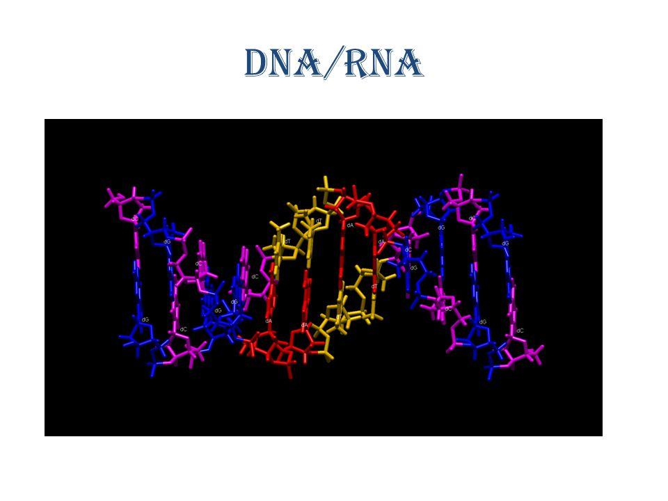 DNA/RNA http://www.youtube.com/watch v=qy8dk5iS1f0