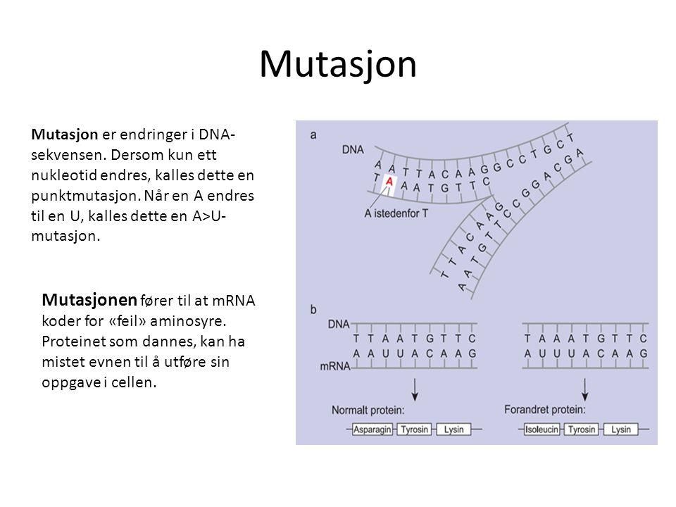 Mutasjon