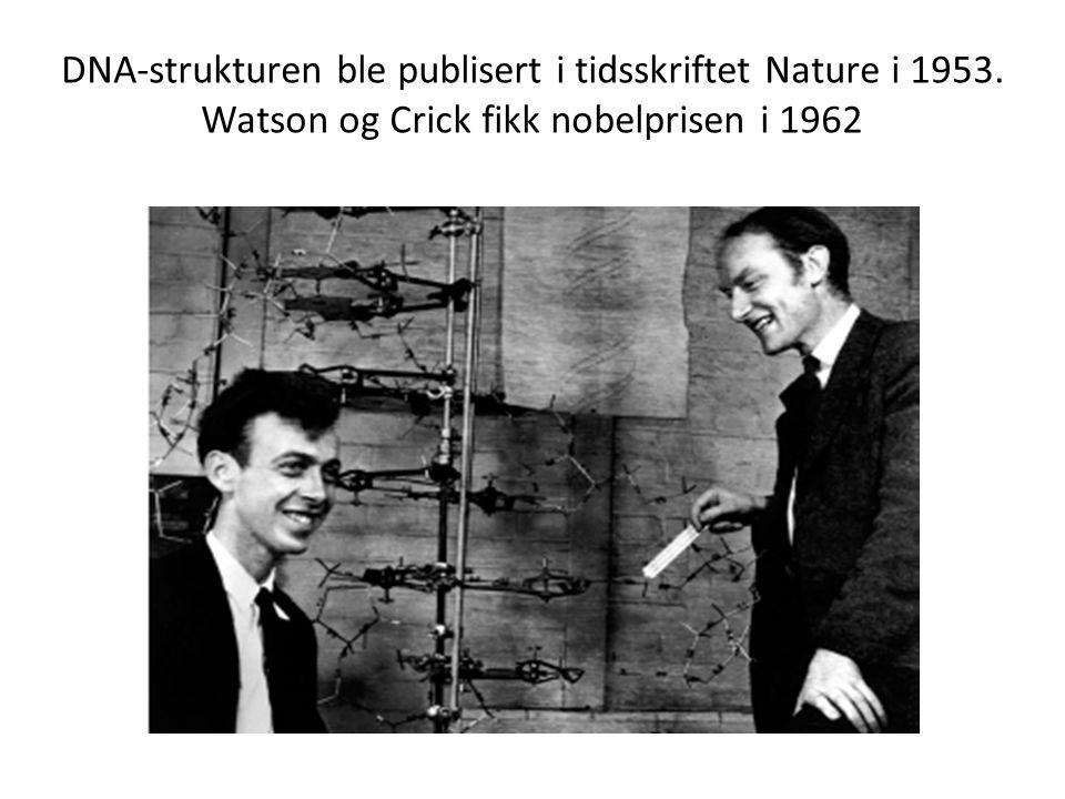 DNA-strukturen ble publisert i tidsskriftet Nature i 1953