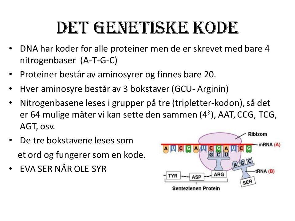 Det Genetiske kode DNA har koder for alle proteiner men de er skrevet med bare 4 nitrogenbaser (A-T-G-C)