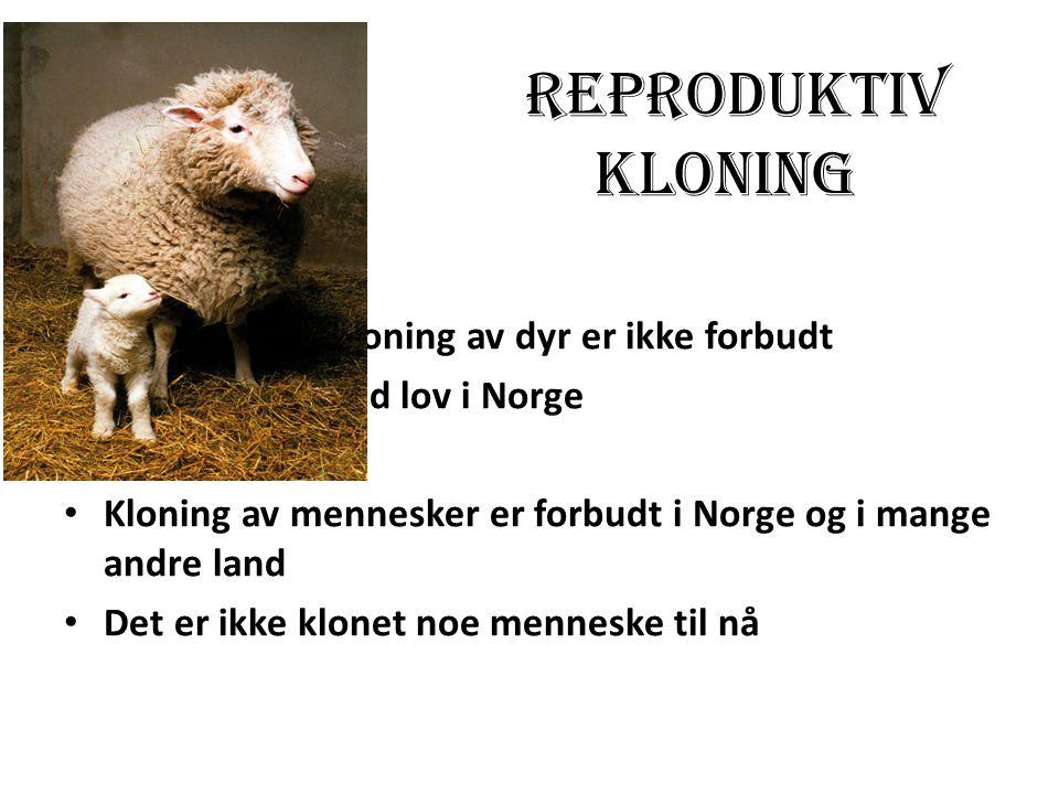 Kloning av dyr er ikke forbudt ved lov i Norge