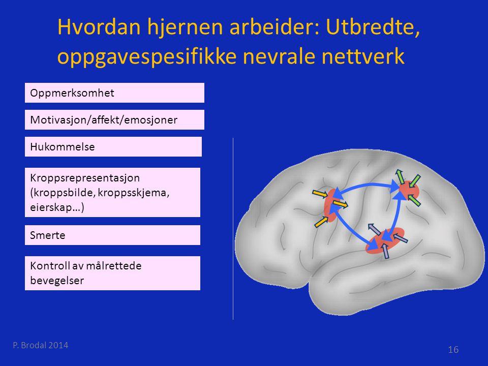 Hvordan hjernen arbeider: Utbredte, oppgavespesifikke nevrale nettverk