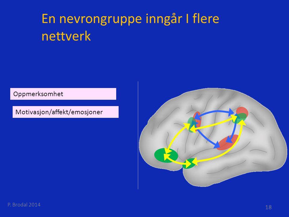 En nevrongruppe inngår I flere nettverk