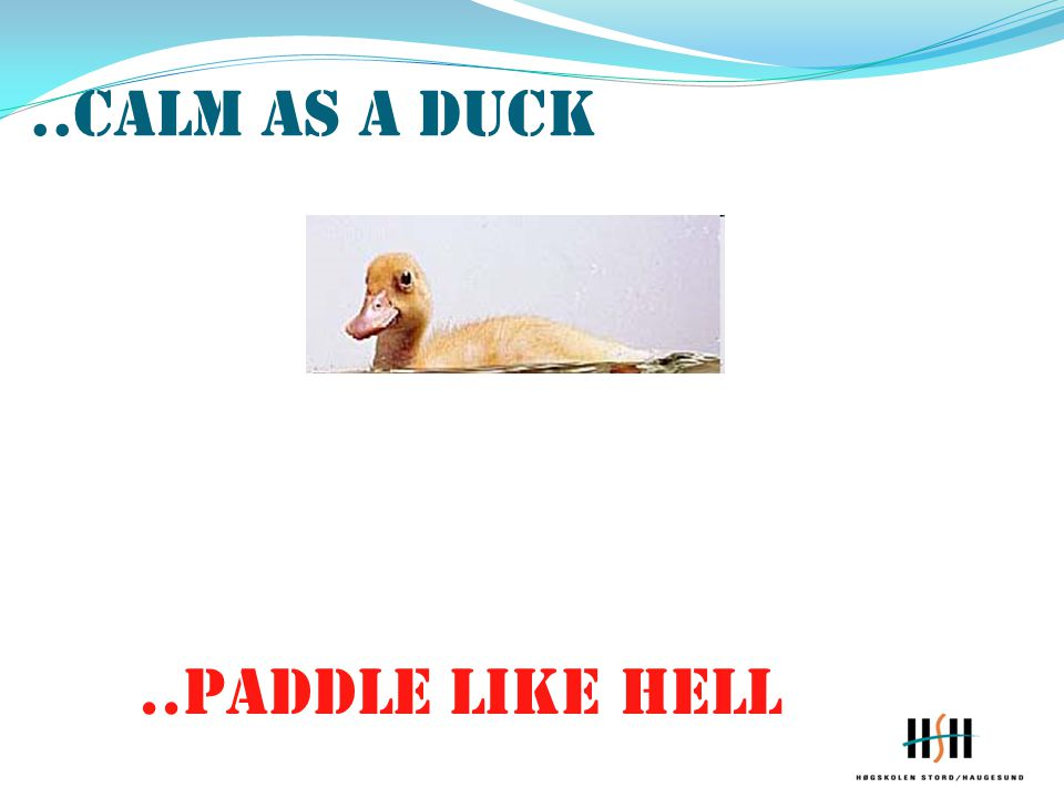 ..calm as a duck ..paddle like hell