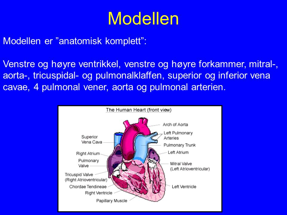 Modellen Modellen er anatomisk komplett :