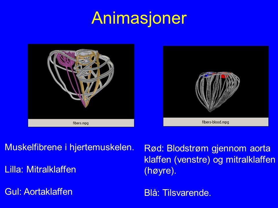 Animasjoner Muskelfibrene i hjertemuskelen.