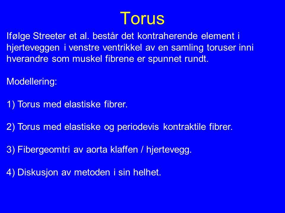 Torus Ifølge Streeter et al. består det kontraherende element i
