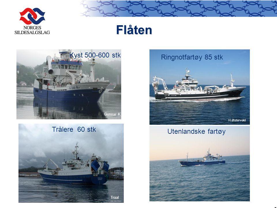 Flåten Kyst 500-600 stk Ringnotfartøy 85 stk Trålere 60 stk
