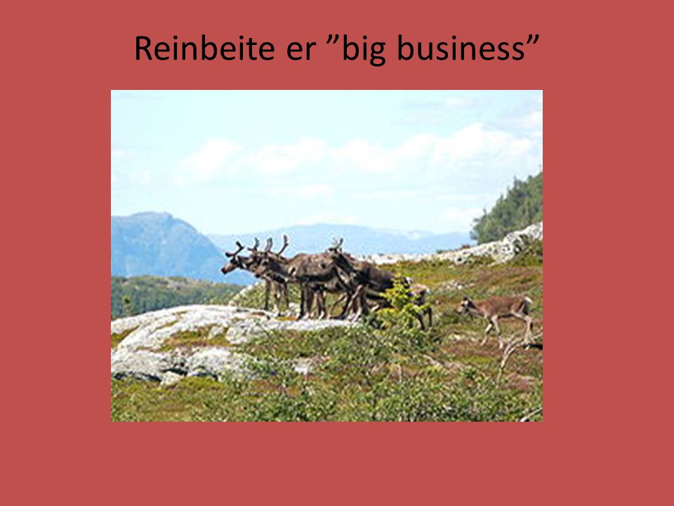 Reinbeite er big business