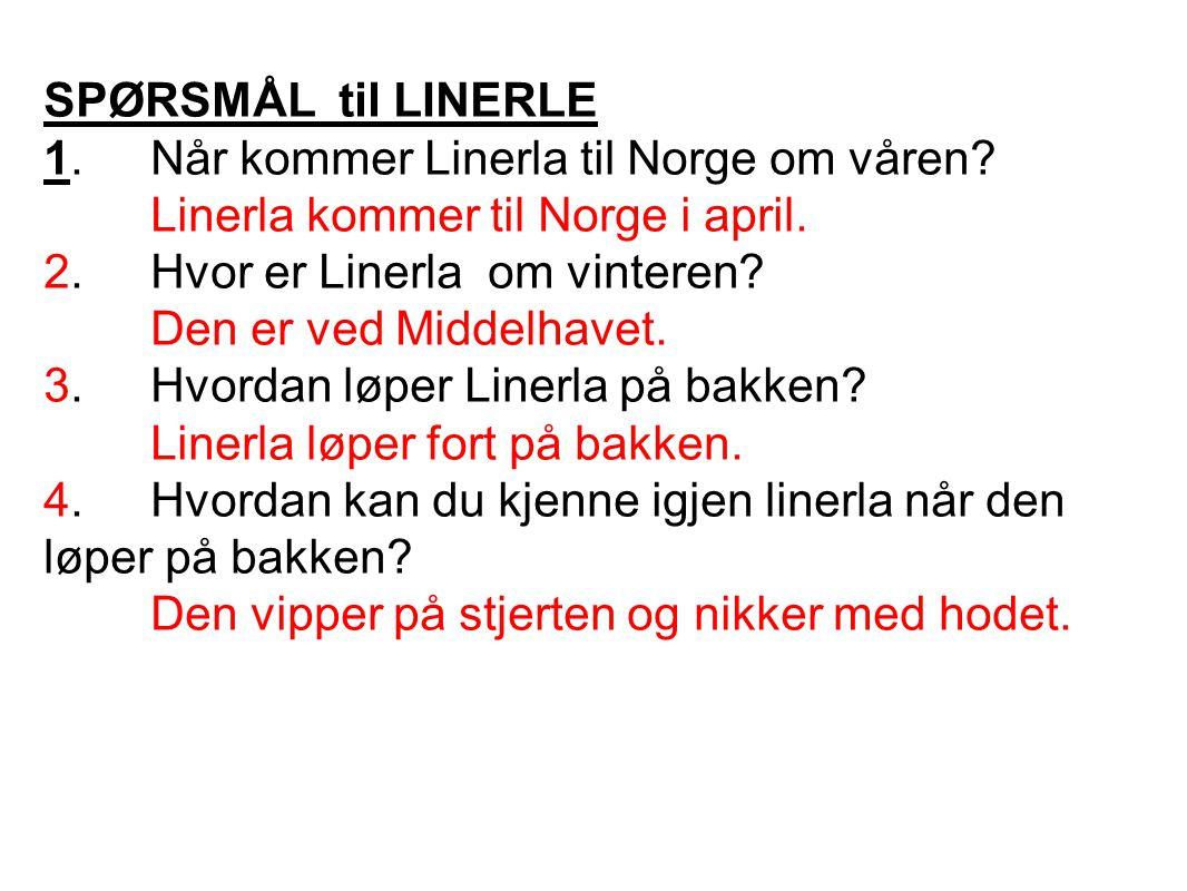 SPØRSMÅL til LINERLE 1. Når kommer Linerla til Norge om våren Linerla kommer til Norge i april. 2. Hvor er Linerla om vinteren