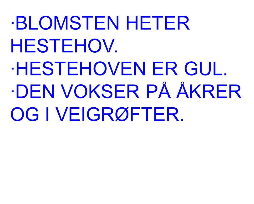 ·BLOMSTEN HETER HESTEHOV.