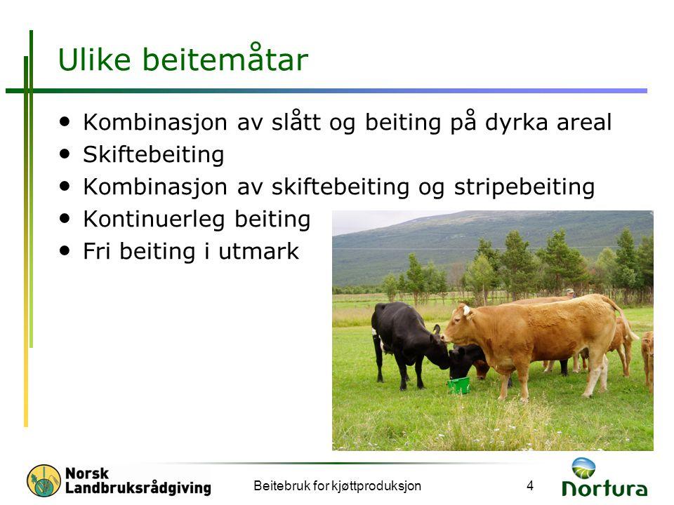 Beitebruk for kjøttproduksjon