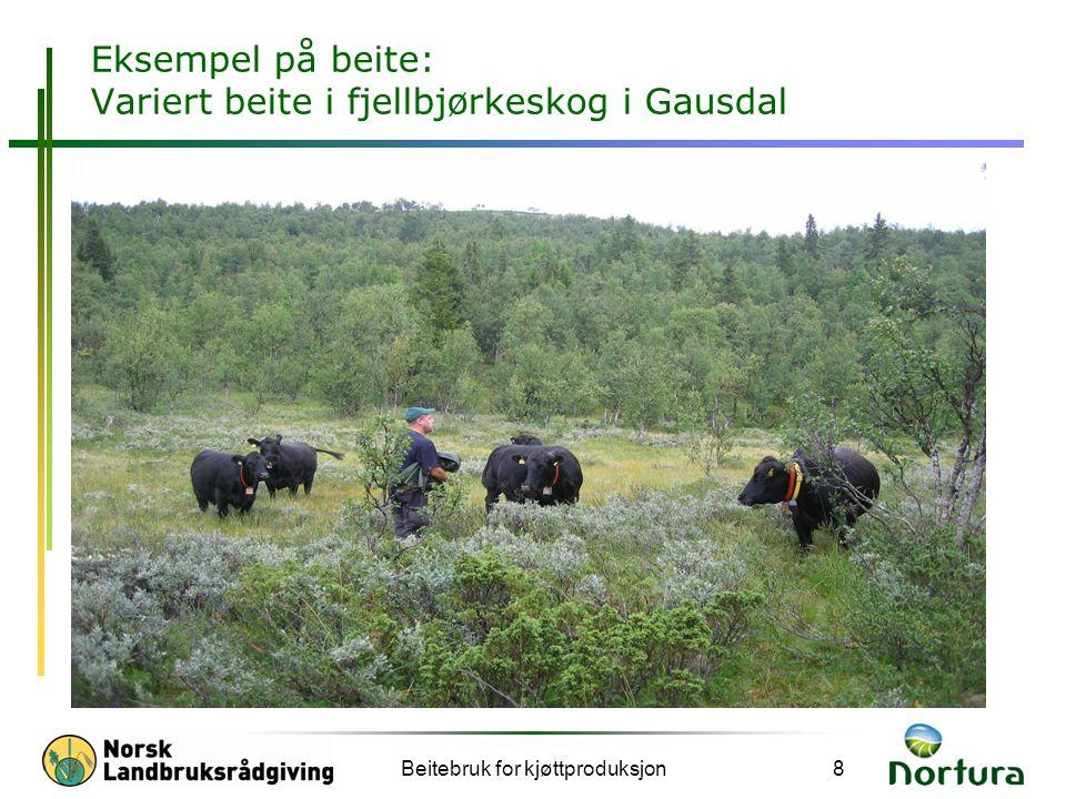 Eksempel på beite: Variert beite i fjellbjørkeskog i Gausdal