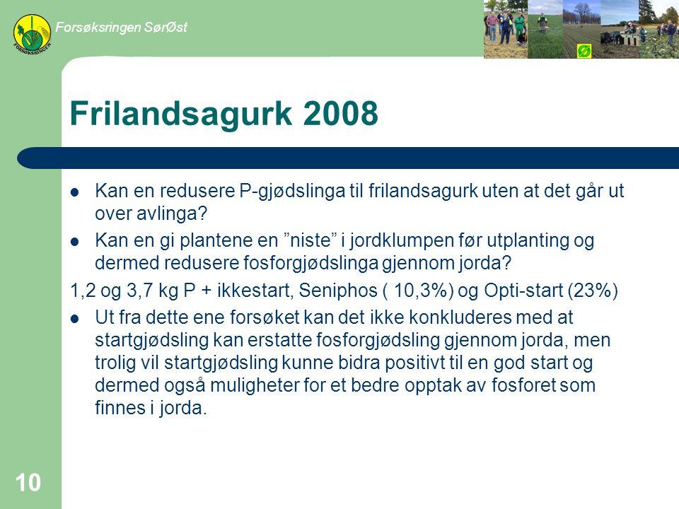 Forsøksringen SørØst Frilandsagurk 2008. Kan en redusere P-gjødslinga til frilandsagurk uten at det går ut over avlinga