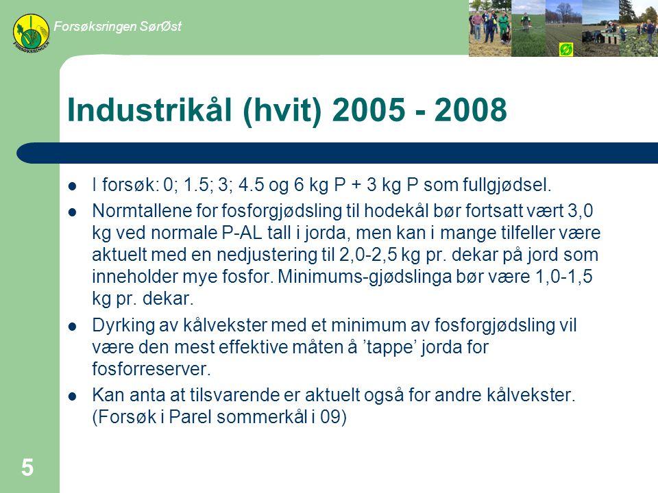 Forsøksringen SørØst Industrikål (hvit) 2005 - 2008. I forsøk: 0; 1.5; 3; 4.5 og 6 kg P + 3 kg P som fullgjødsel.