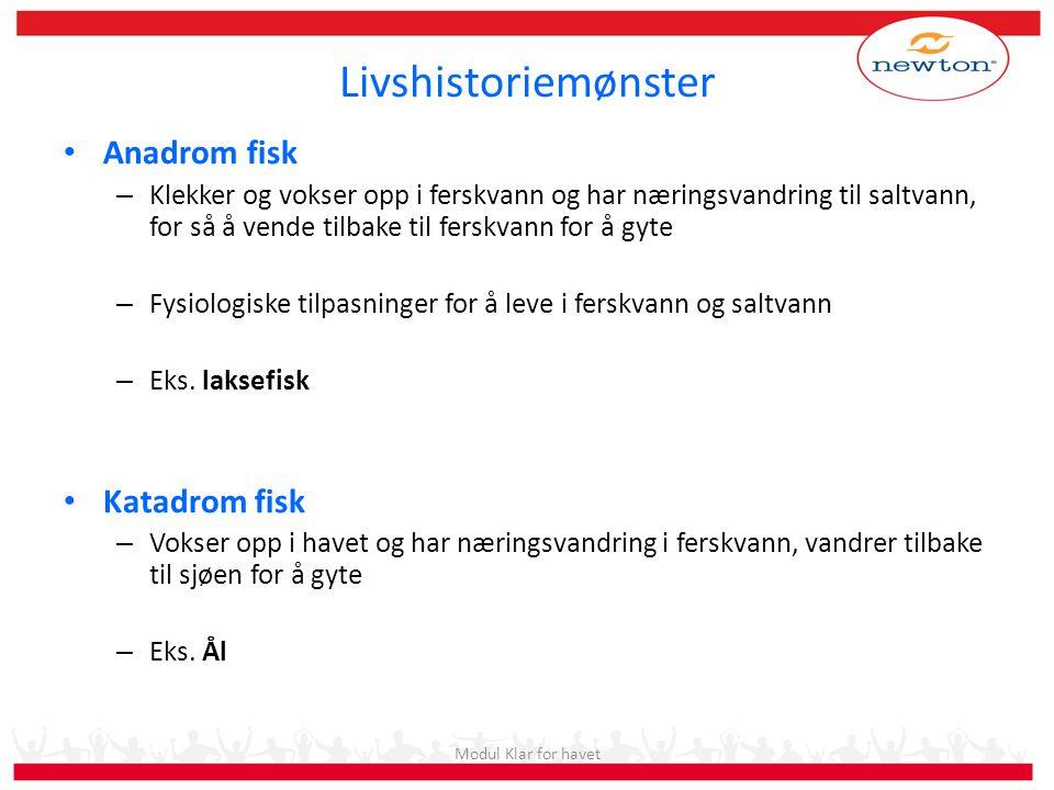 Livshistoriemønster Anadrom fisk Katadrom fisk