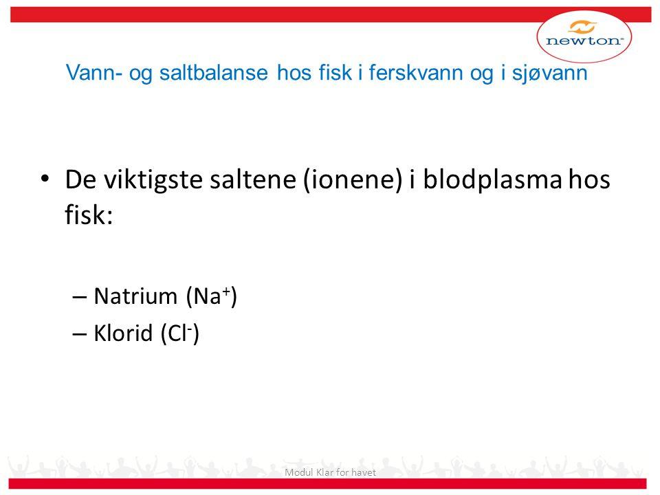 De viktigste saltene (ionene) i blodplasma hos fisk: